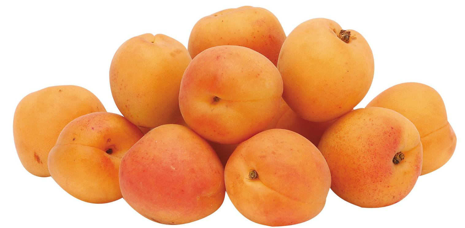 Apricot Elixirs | Divine Organics